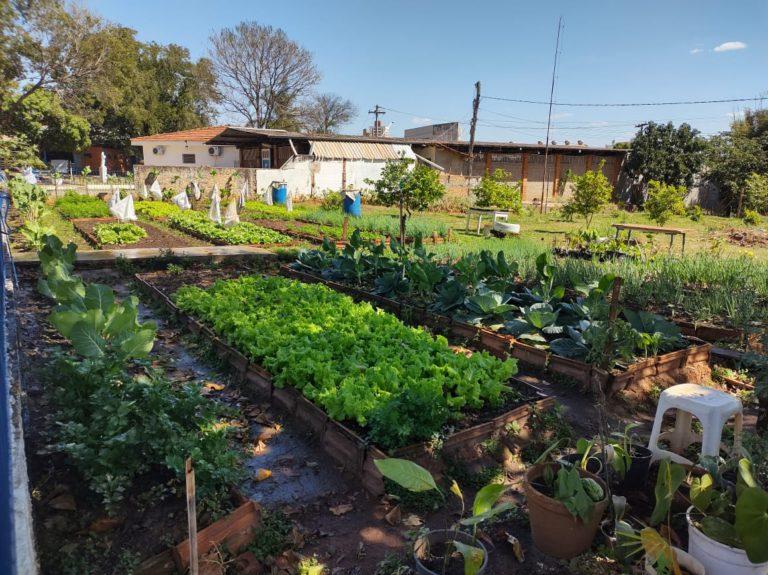 Nossa horta da Vila VIcentina Bauru